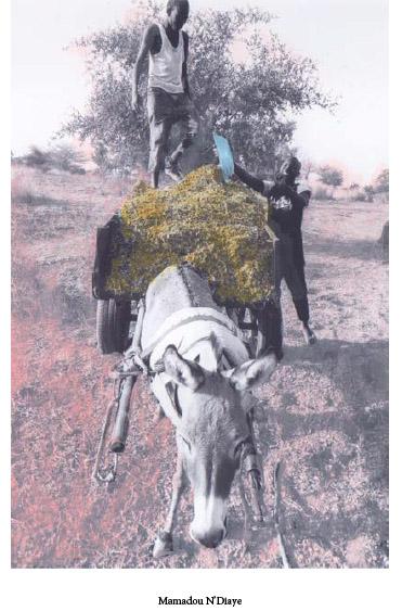 LB_0015_Mamadou Ndiaye