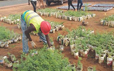 Projet de reforestation